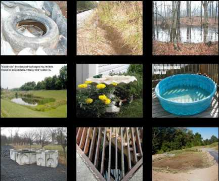 Several images of places where mosquito larvae can breed