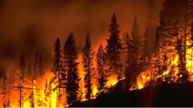 Forest Fire Image   (JPG)